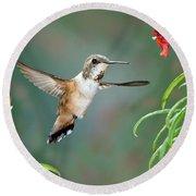 Rufous Hummingbird Female At Monkey Round Beach Towel