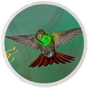 Rufous-tailed Hummer Round Beach Towel