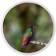 Rufous-tailed Hummingbird Round Beach Towel