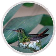 Rufous-tailed Hummingbird On Nest Round Beach Towel