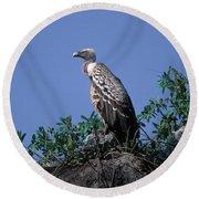 Ruppells Griffon Vulture Round Beach Towel