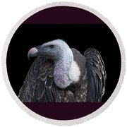 Ruppel's Griffon On Black Round Beach Towel