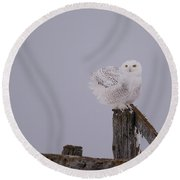Rustic Snowy Perch Round Beach Towel