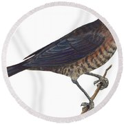 Rusty Blackbird  Round Beach Towel