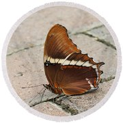 Rusty Tipped Page Butterfly Round Beach Towel