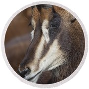Sable Antelope V5 Round Beach Towel
