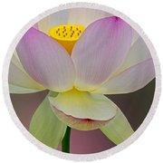 Sacred Lotus Blossom Round Beach Towel