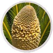 Sago Palm Seed Pod Round Beach Towel