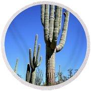 Saguaro At The Saguaro National Park Round Beach Towel