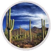 Saguaro Cactuses In Saguaro National Park Round Beach Towel