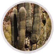 Saguaro Of Many Arms Round Beach Towel