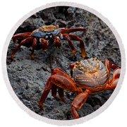 Sally Light Foot Crabs Galapagos Round Beach Towel