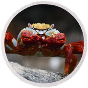 Sally Lightfoot Crab Galapagos Round Beach Towel