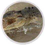 Saltwater Crocodile Round Beach Towel