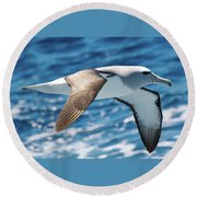Salvins Albatross Round Beach Towel