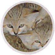 Sand Cat Felis Margarita Round Beach Towel