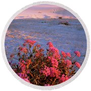 Sand Verbenas At Sunset White Sands National Monument Round Beach Towel