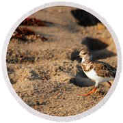 Sanderling 005 Round Beach Towel