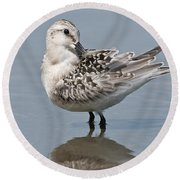 Sanderling Pictures 32 Round Beach Towel