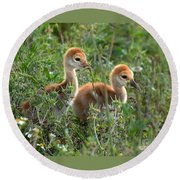 Sandhill Chicks Round Beach Towel