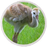 Sandhill Crane Chick I Round Beach Towel