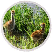 Sandhill Crane Chicks  Round Beach Towel