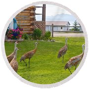 Sandhill Cranes On The Lawn By The Statue Of Mary In Homer-alaska Round Beach Towel
