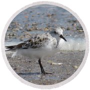 Sandpiper And Shells Round Beach Towel