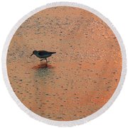 Sandpiper On Shoreline Round Beach Towel
