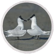 Sandwich Terns Round Beach Towel