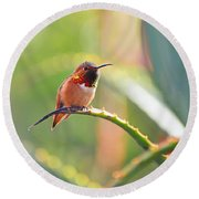 Santa Barbara Zoo Hummingbird Round Beach Towel