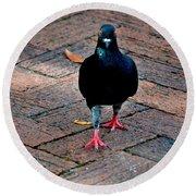 Savannah Pigeon Round Beach Towel
