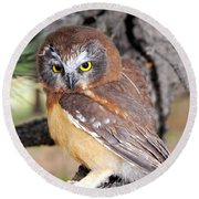 Saw-whet Owl In Conifers Round Beach Towel