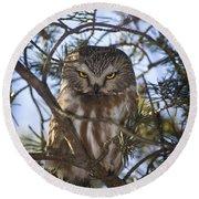 Saw Whet Owl Round Beach Towel