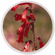 Scarlet Colorado Penstemons Round Beach Towel