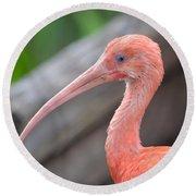 Scarlet Ibis 1 Round Beach Towel