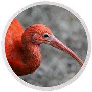 Scarlet Ibis Round Beach Towel