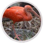 Scarlet Ibis One Legged Pose Round Beach Towel