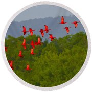 Scarlet Ibis Round Beach Towel by Tony Beck