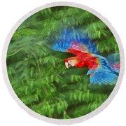 Scarlet Macaw Juvenile In Flight Round Beach Towel
