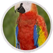 Scarlet Macaw Parrot Round Beach Towel