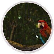 Scarlet Macaw Profile Round Beach Towel
