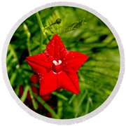 Scarlet Morning Glory - Horizontal Round Beach Towel