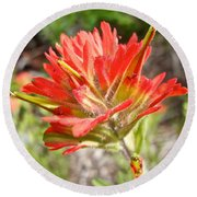 Scarlet Paintbrush Along John's Lake Trail In Glacier Np-mt Round Beach Towel