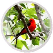 Scarlet Tanager - 19 Round Beach Towel