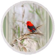 Scarlet Tanager 3630-10-ttp Round Beach Towel
