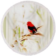 Scarlet Tanager 3630-12 Round Beach Towel