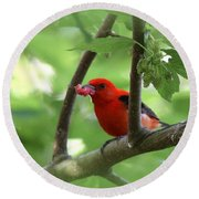 Scarlet Tanager - Fallout Round Beach Towel