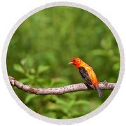 Scarlet Tanager On Snag Round Beach Towel