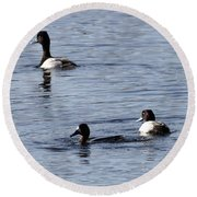 Scaup Ducks In The Spring Round Beach Towel